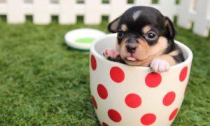 Kaffe til hunden din